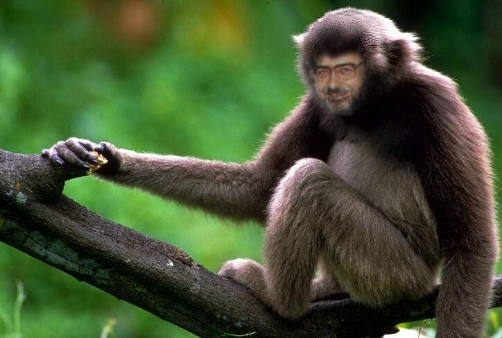 Я - обезьяна